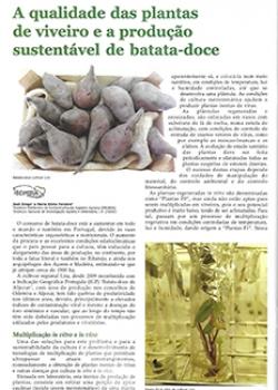 A qualidade das plantas de viveiro e a produção sustentável de batata-doce